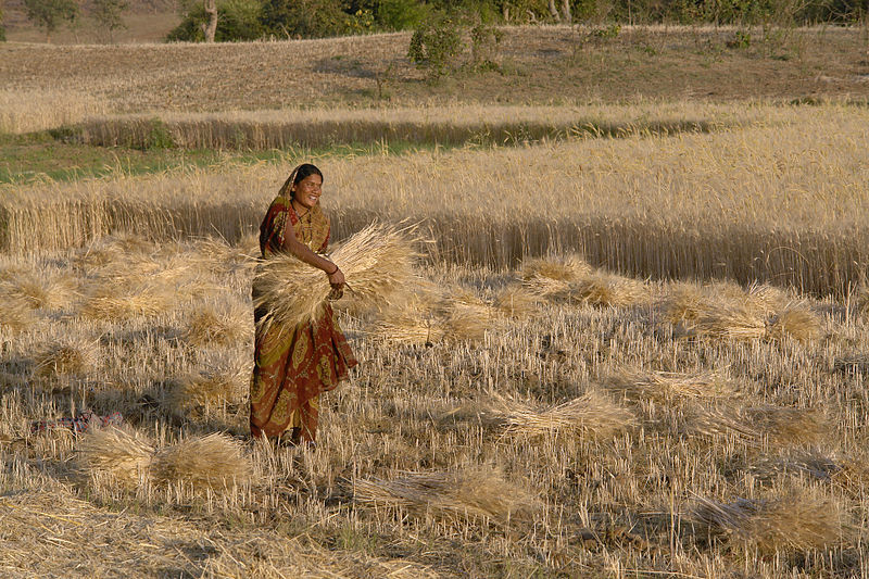 Photo of Climate Change and Women: How Global Temperature Rise Will Affect Women Laborers in the Global South