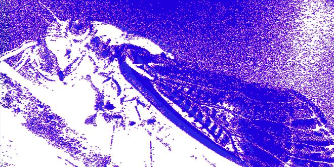 Photo of Cicadas